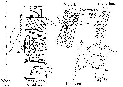 Cell Wall Lignin